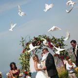White Flite Doves